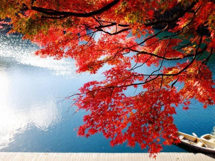 DU LỊCH NHẬT BẢN MÙA LÁ ĐỎ HÀ NỘI – TOKYO - HAKONE – PHÚ SĨ – TOKYO- HÀ NỘI