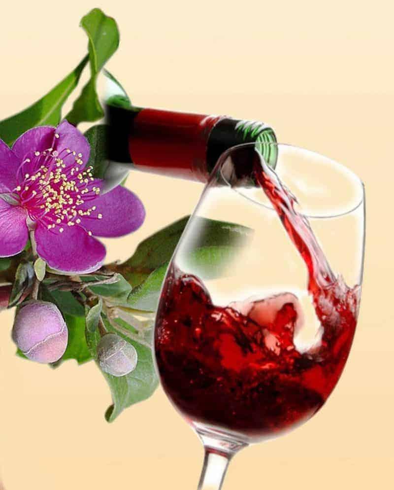 Đặc Sản rượu Sim Phú Quốc mua về làm quà