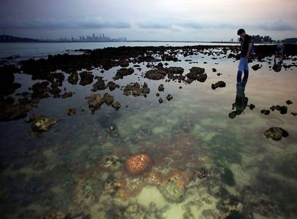 Saint Jonh's Island có gì ?