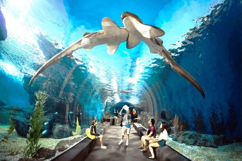 Khám phá công viên Sea Life Ocean Bangkok