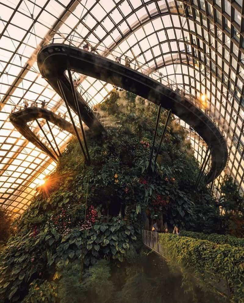 Flower Dome và Cloud Forest Singapore