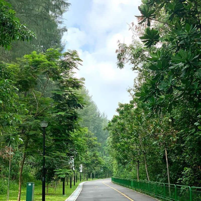 Hệ thực vật ở Punggol