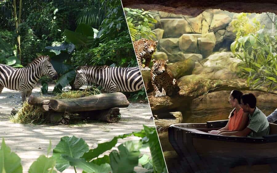 Một số động vật tại River Safari