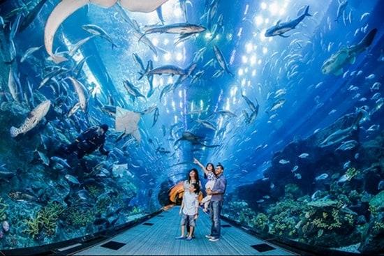 Khám phá Thủy cung S.E.A Aquarium