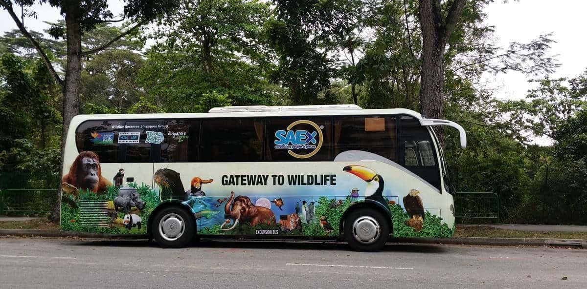 singapore-zoo-19