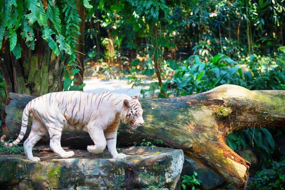 singapore-zoo-4