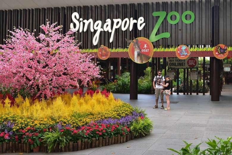 singapore-zoo-6