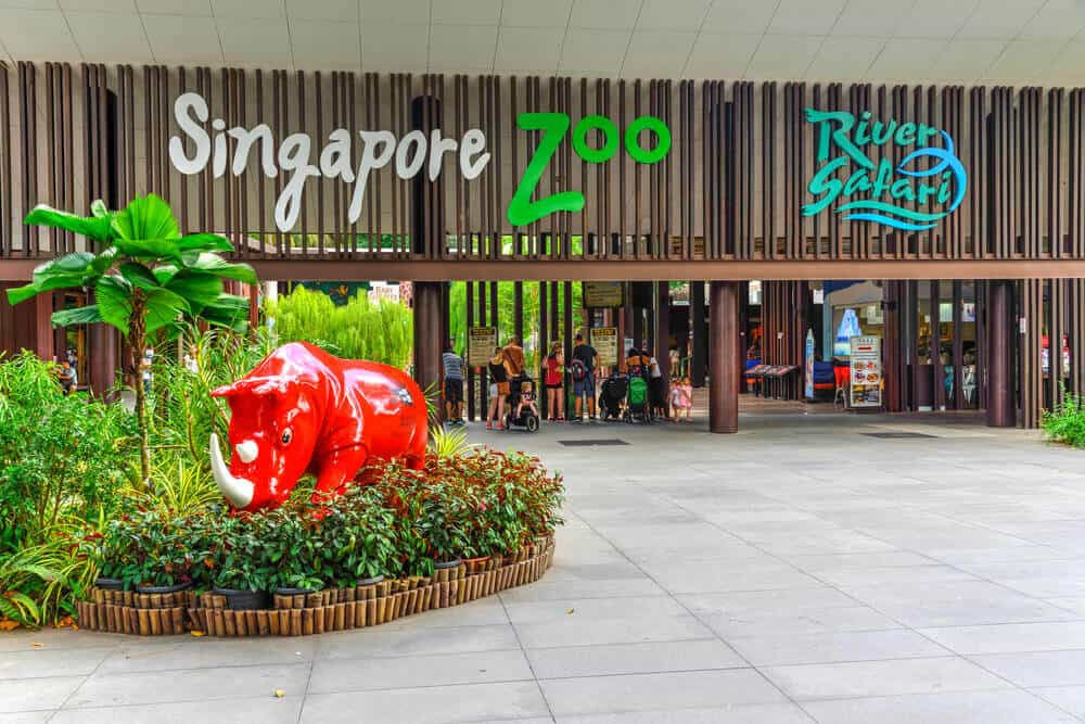 singapore-zoo-7
