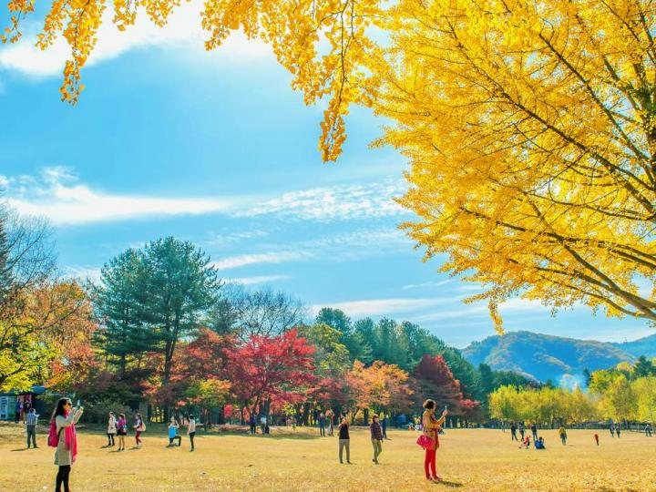 Tour Seoul – Nami – Everland