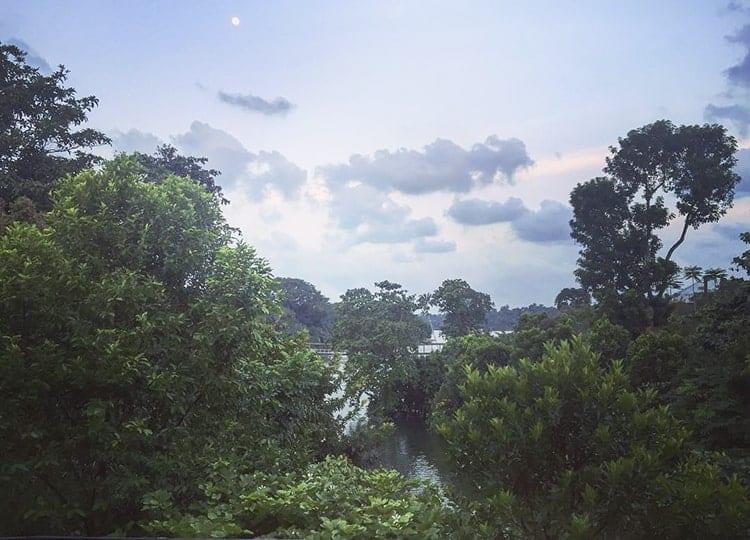 Khu rừng Amazon - lá phổi xanh trái đất