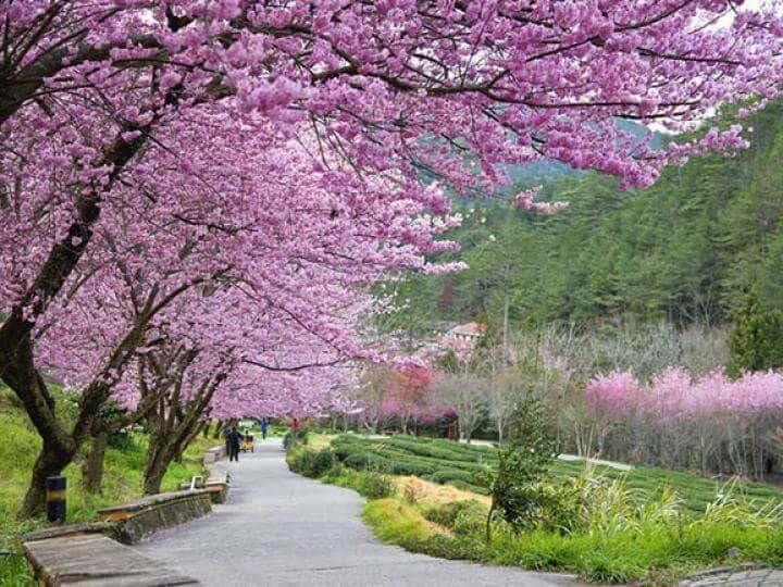 Du Lịch Đài Loan - Bốn Mùa Hoa: Hà Nội – Đài Trung – Cao Hùng – Nam Đầu