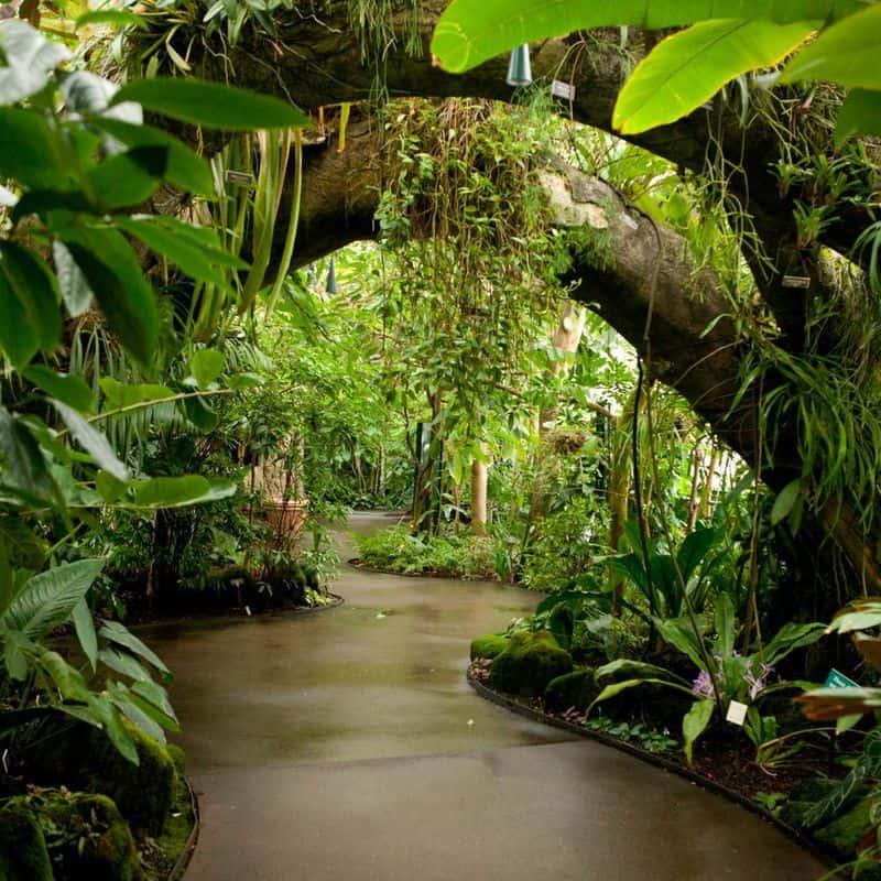 Lối vào khu rừng nhiệt đới
