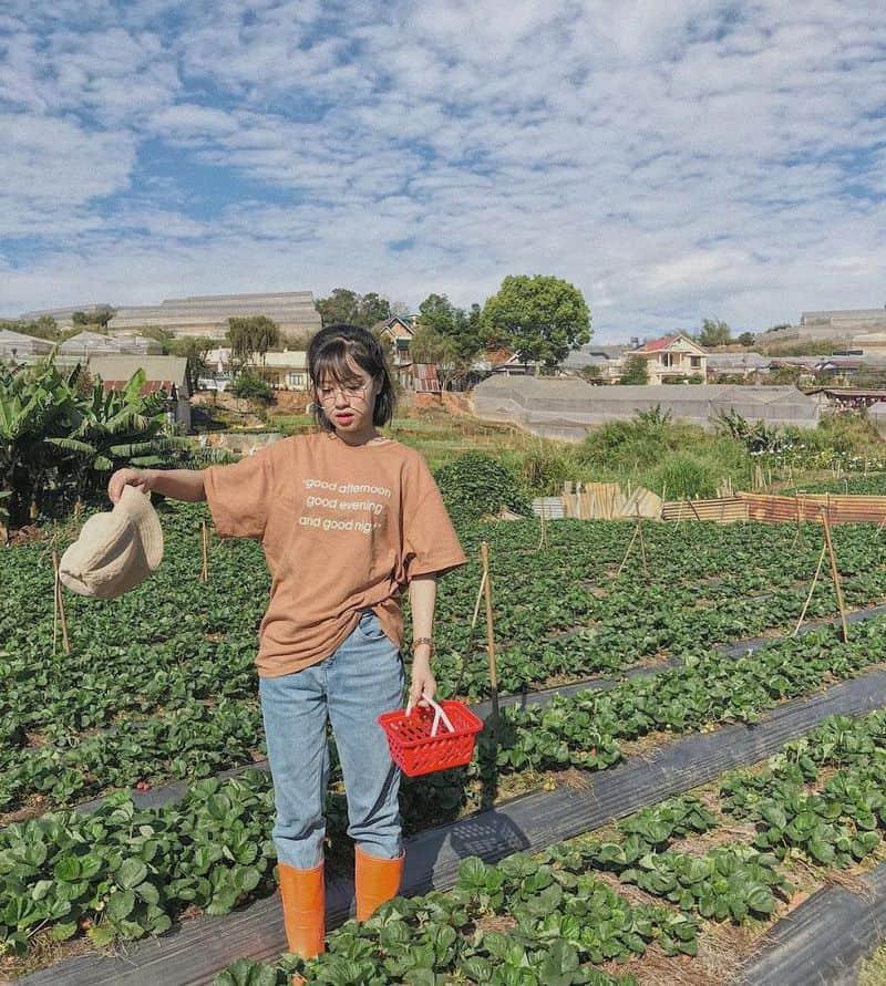Mô hình trồng dâu tây truyền thống cửa vườn 88 Thánh Mẫu