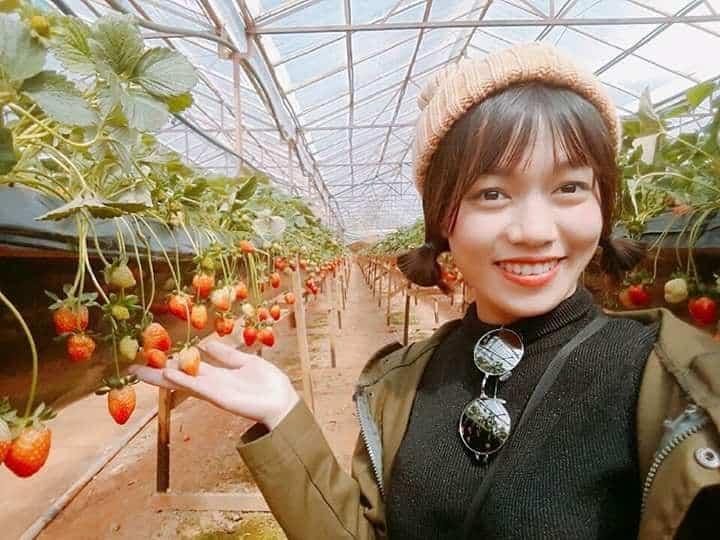 Tham quan vườn dâu Phước Lộc