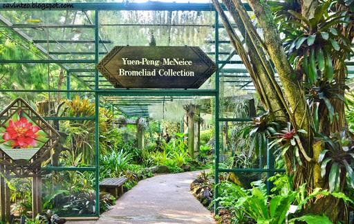 Yuen - Peng McNeice Bromeliad Collection