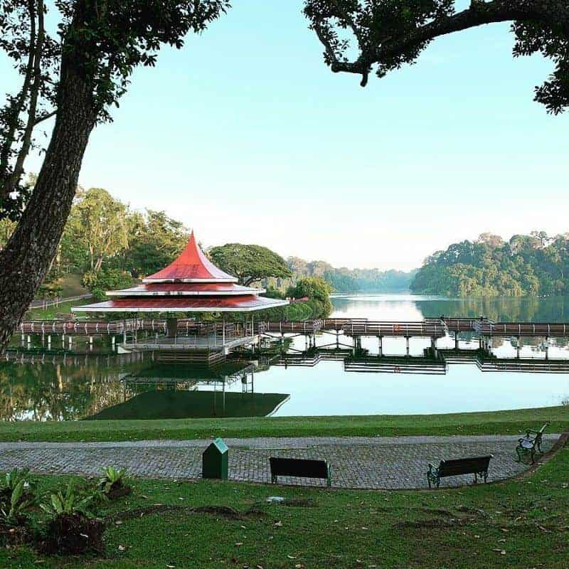 MacRitchie Reservoir ở Singapore