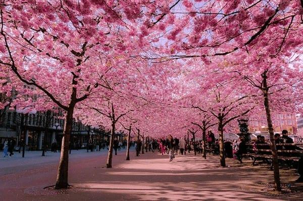 Công viên Sumida