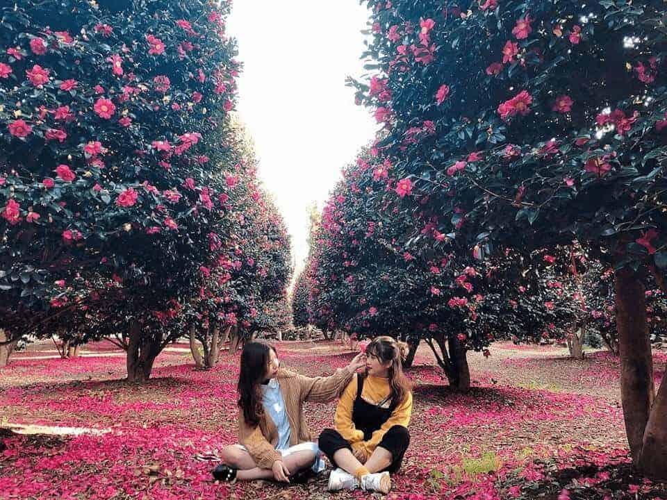 Tham quan Đồi Camellia