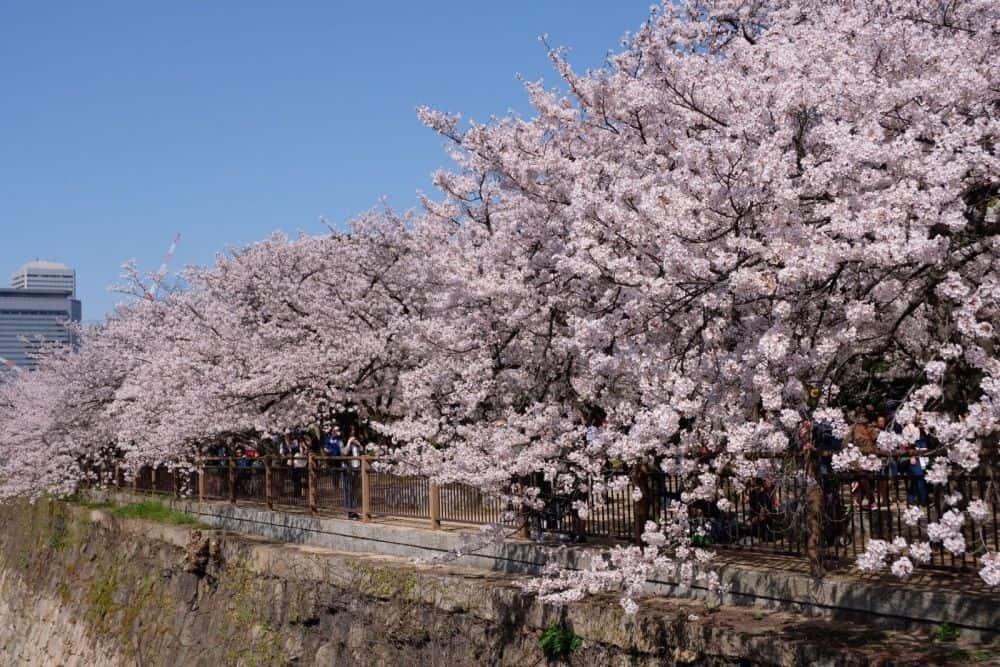 Nhật Bản mùa xuân