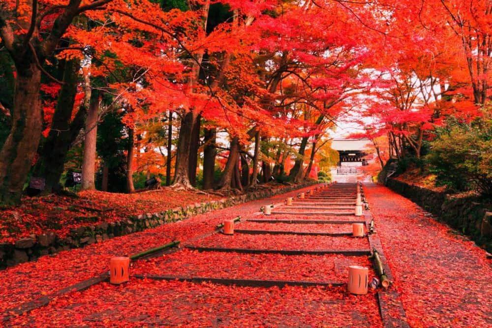 Mùa thu ở Nhật Bản có gì đẹp