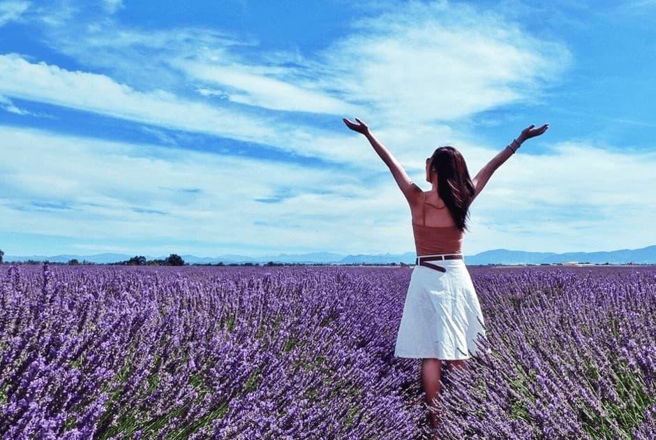 cánh đồng hoa lavender tại Pháp