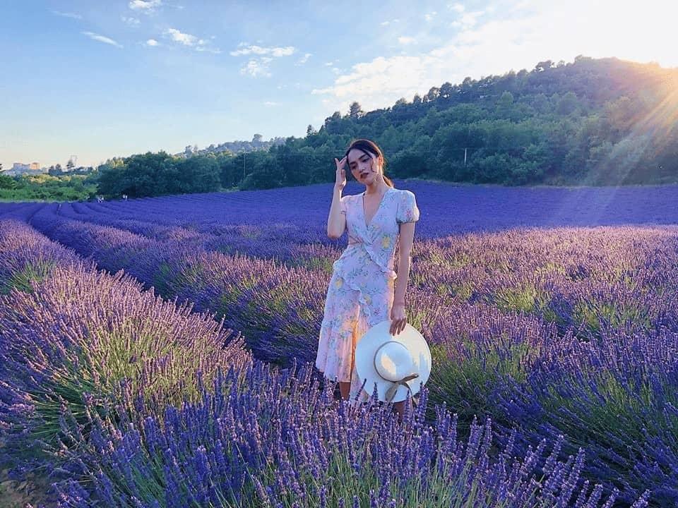 vườn hoa lavender Pháp