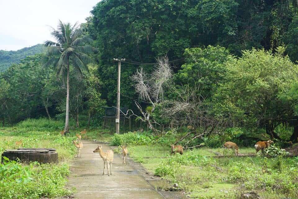 Hệ sinh thái vườn quốc gia Cát Bà