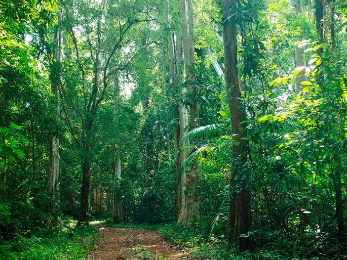 Khu rừng Vườn quốc gia Cát bà