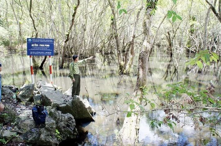 Rừng ngập mặn ở vườn quốc gia Cát Bà