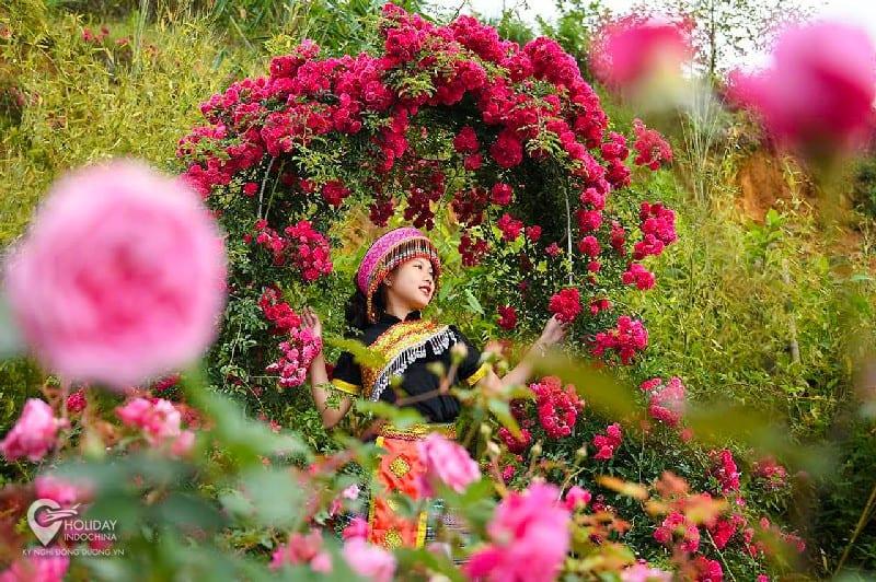 Thung lũng hoa hồng Sapa - Địa điểm du lịch nổi tiếng tại SaPa