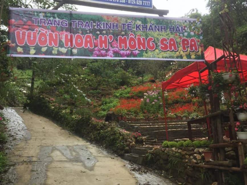 Vườn hoa H'Mông SaPa