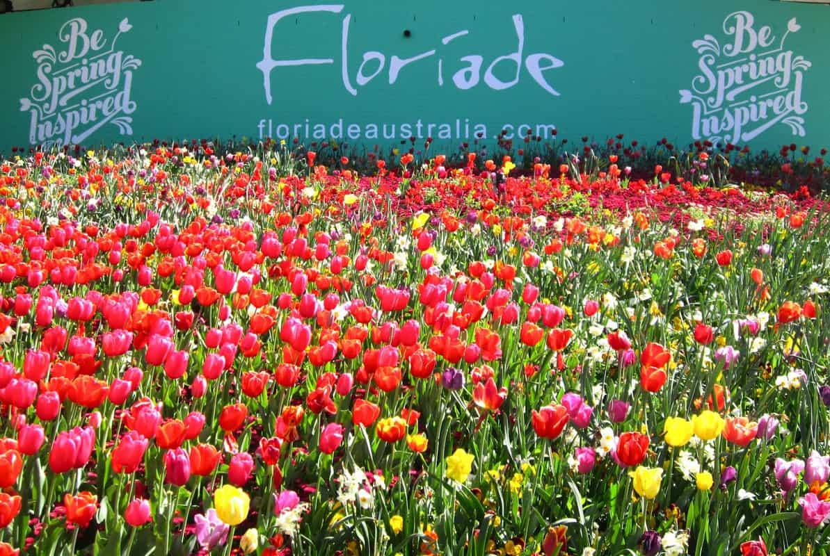 Cánh đồng hoa nở rộ vào mùa xuân trên nước Úc