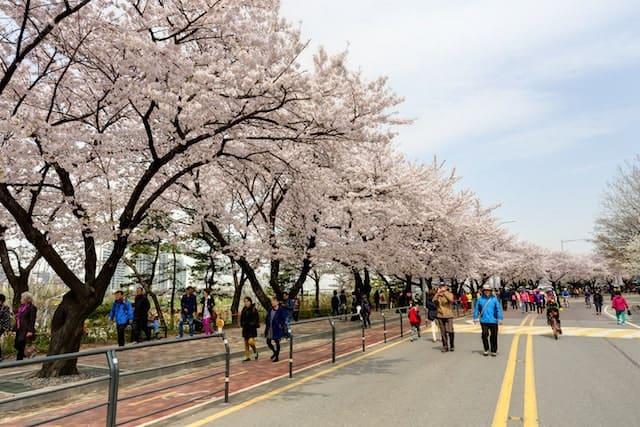 Công viên Yeouido