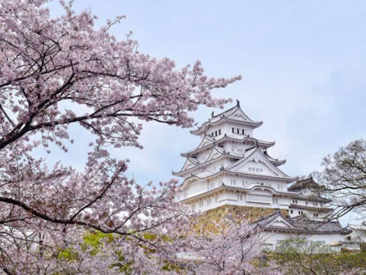 Tour Du Lịch Hoa Anh Đào 2020 : Tokyo – Núi Phú Sỹ -nagoya – Kyoto –osaka 6N5Đ Bay ANA