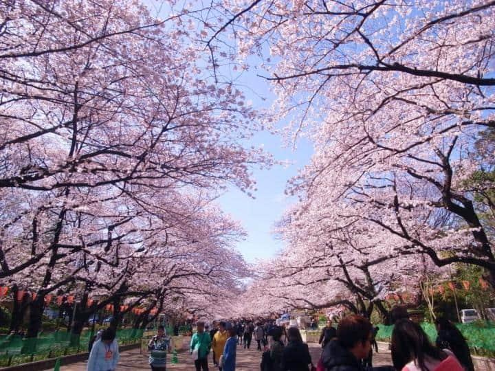 Tour Nhật Bản Ngắm Hoa Anh Đào 4N3Đ: Hà Nội – Tokyo – Hakone – Phú Sĩ – Tokyo- Hà Nội Bay VNA