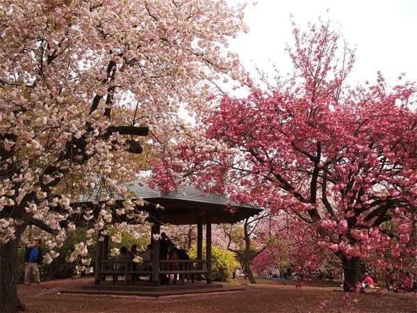 Các địa điểm ngắm hoa anh đào ở Nhật Bản