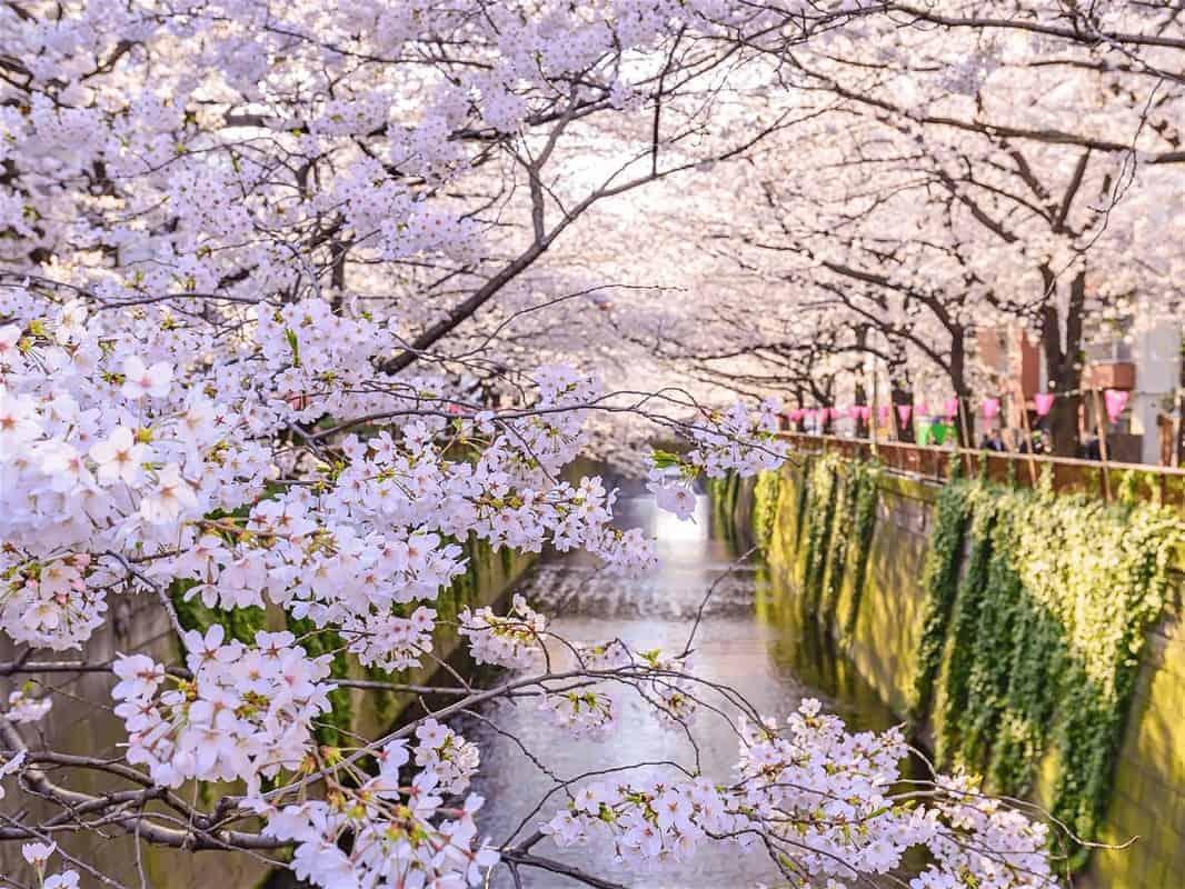 Địa điểm ngắm hoa anh đào đẹp ở Nhật Bản