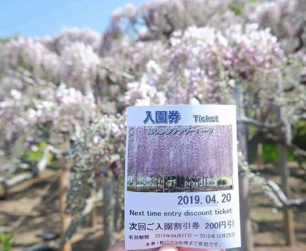 Mùa hoa tử đằng ở Nhật Bản