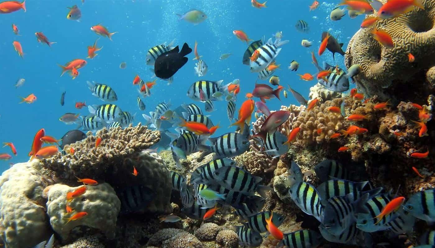 đại dương dưới biển