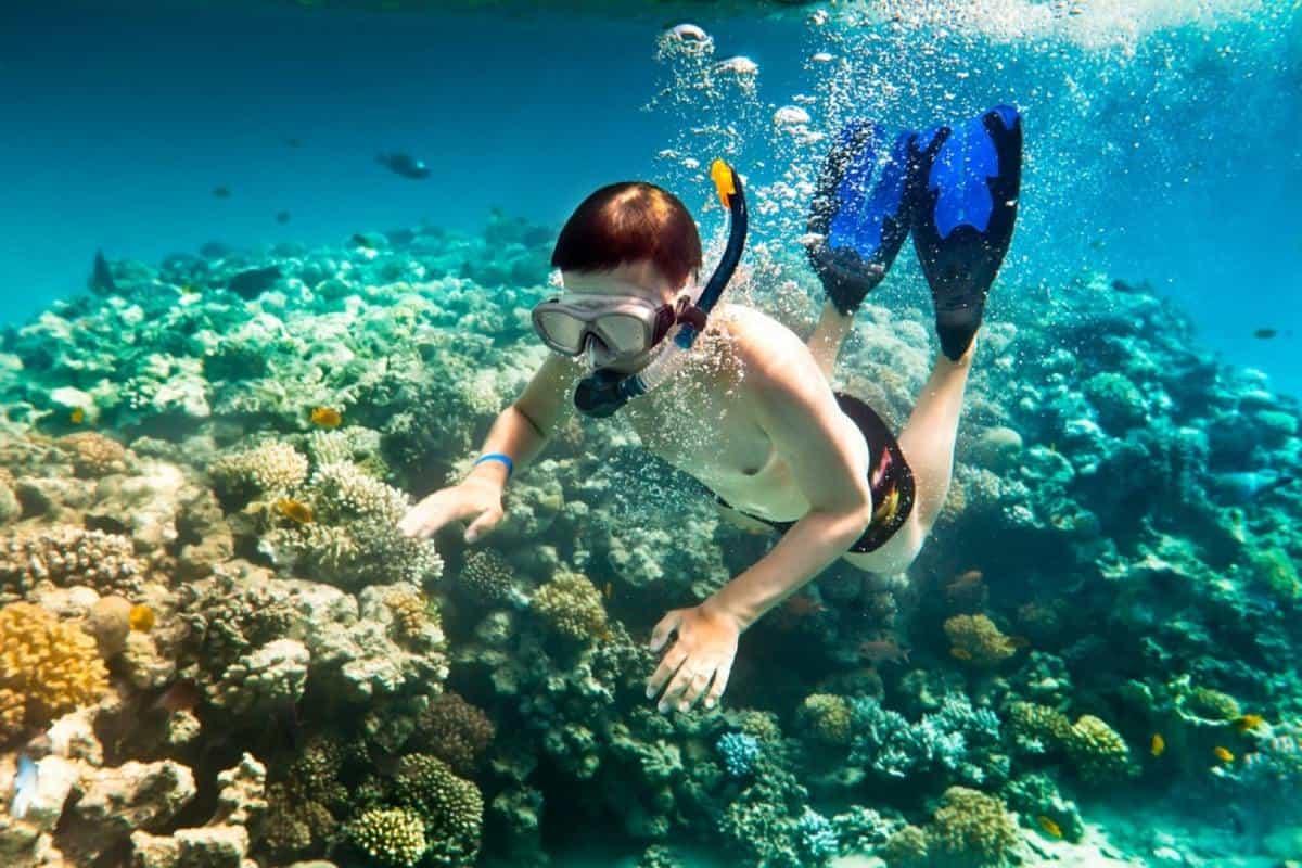 Trải nghiệm lặn ngắm san hô Đà Nẵng đại diện
