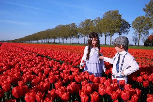 Ngắm hoa tulip ở Amsterdam