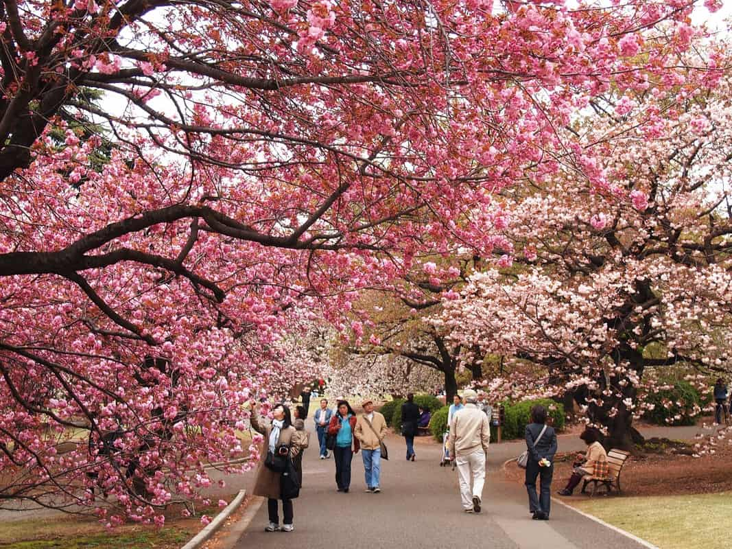 Nên Đi Du Lịch Nhật Bản Vào Tháng Mấy