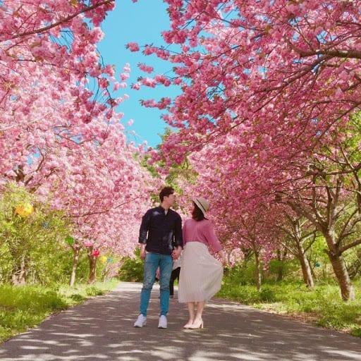 Thời tiết Hàn Quốc tháng 4 nên mặc gì