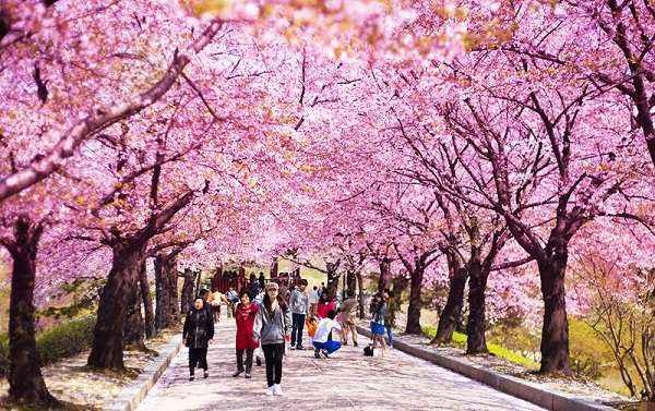Thời Tiết Hàn Quốc Tháng 4