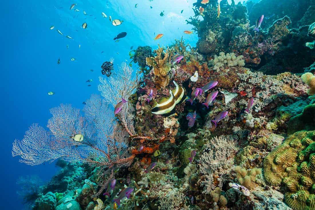 Rạn san hô Great Barrier ở Úc