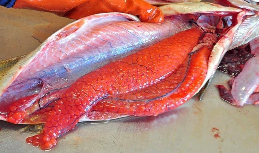 Cách người Nhật chế biến và thưởng thức cá
