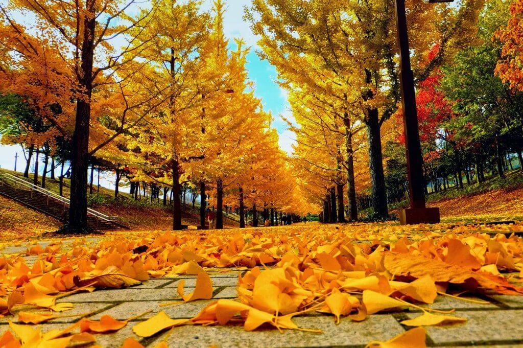 Đảo Nami mùa thu
