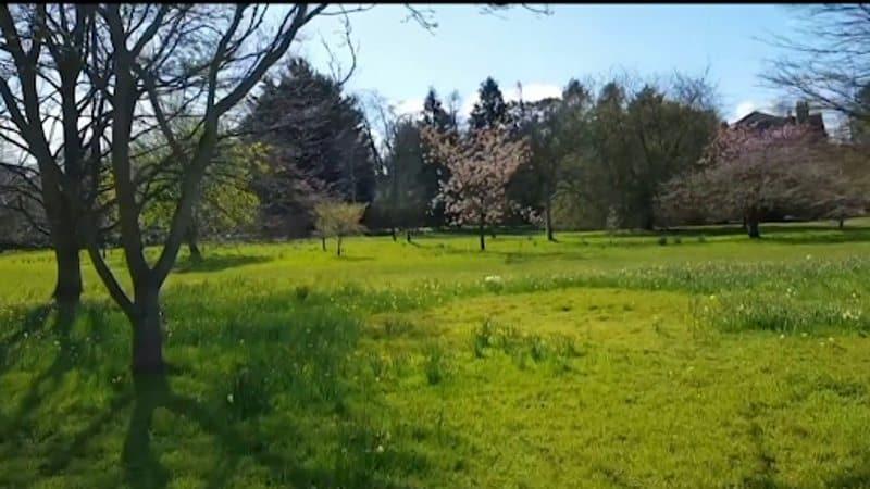 Vườn bách thảo Đại học Cambridge