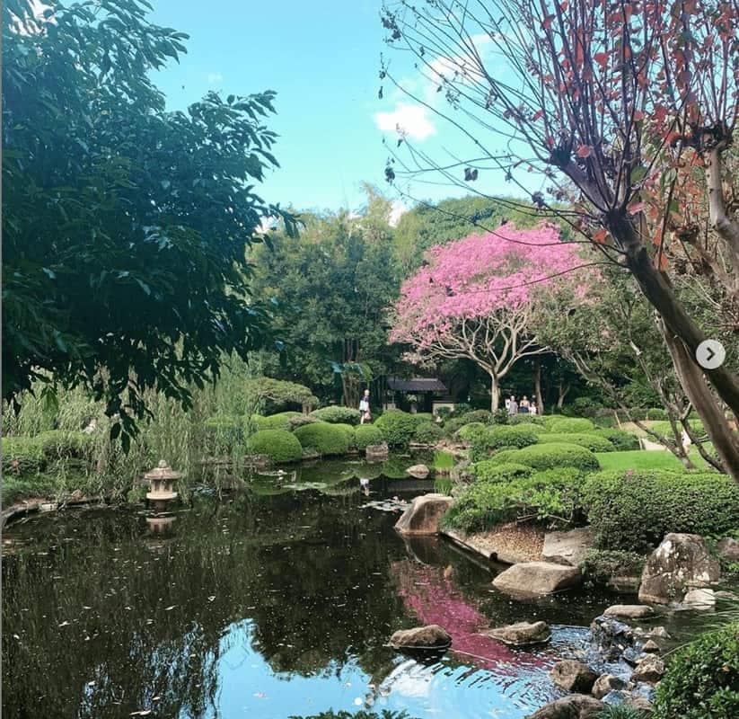 Vườn bách thảo Brisbane Mount Coot-tha