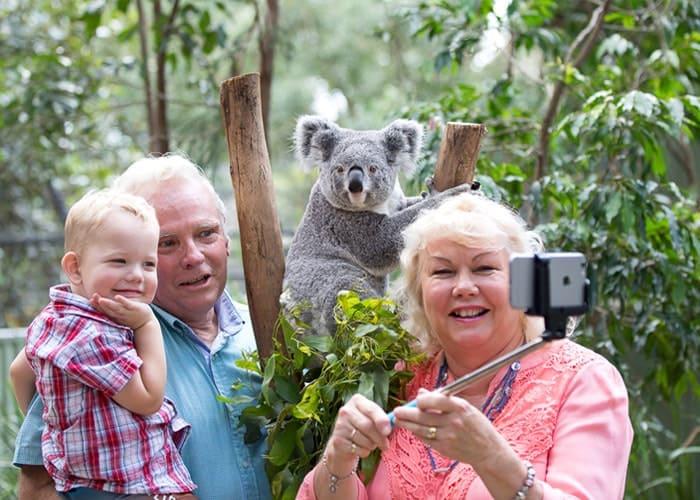 Khu bảo tồn Koala Lone Pine